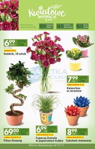 Kwiaty W Biedronce Promocja Cena