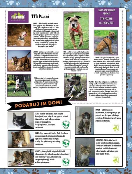 E.Leclerc gazetka promocyjna od 2019-10-22, strona 15